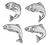 Salmon And Trout Fish Vector Sketch Isolated Icons. Fishing Symbols, Seafood And Fisher Catch Freshw poster