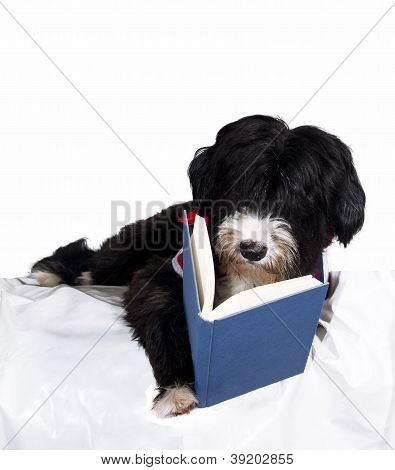 A Dog Read Book
