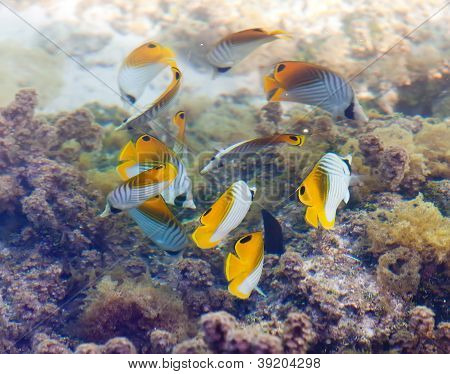 Fishes in corals.Underwater landscape in a sunny day
