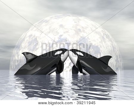 Orca Love - 3D Render