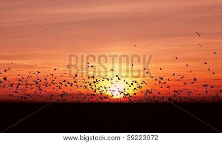 Many Migrating Birds