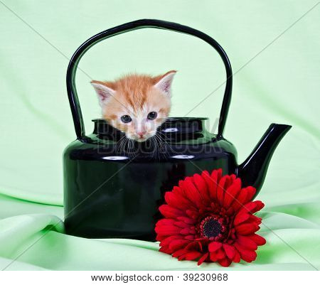 Ginger Kitten Sitting In Black Kettle