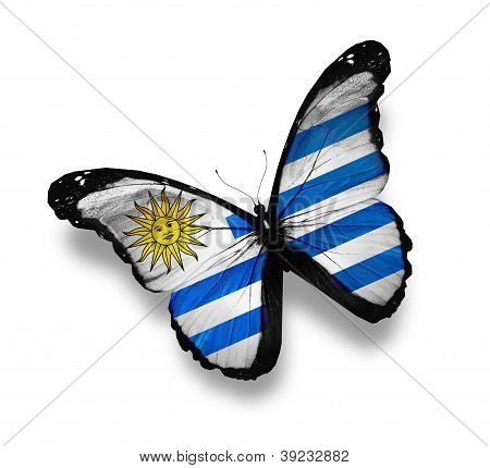 Uruguayan Flag Butterfly, Isolated On White