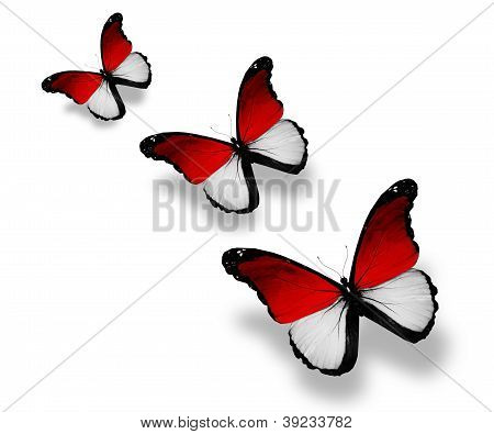Three Monegasque Flag Butterflies, Isolated On White