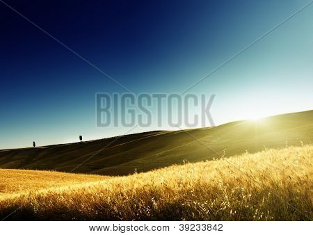 field of barley in Tuscany, Italy