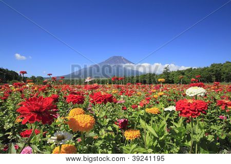 Mt . Fuji and flower