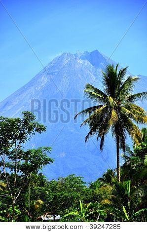 Coconut Tree and Active Volcano