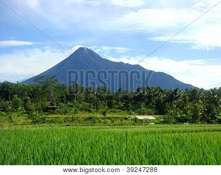 Rice Field and Mt. Merapi Background