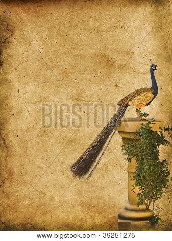 Peacock Grunge Background