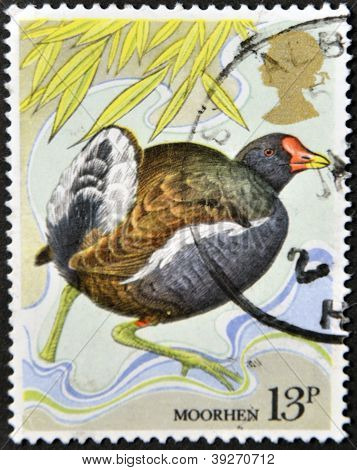 UNITED KINGDOM - CIRCA 1980: A stamp printed in Great Britain shows a moorhen circa 1980