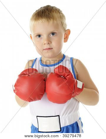 Closeup of a serious preschool boxer holding his gloved fists together.  On a white background.
