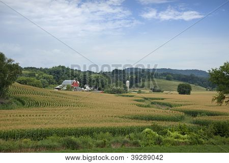 Wisconsin Farm With Red Barn And Corn Field