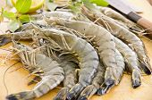 picture of tiger prawn  - black tiger prawns - JPG