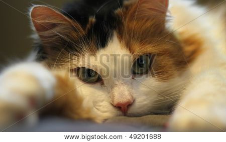 Cute tired cat