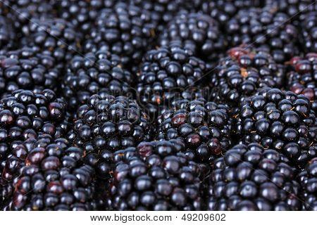 Sweet blackberries close-up