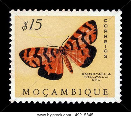 Moth Of The Arctiidae Family, Amphicallia Thelwalli