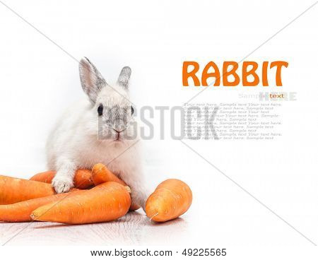 white rabbit and a carrot isolated on white background