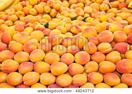 Fresh apricot  at a farmers market. Pula, Croatia.