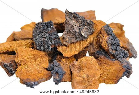 Pieces Of Inonotus Obliquus