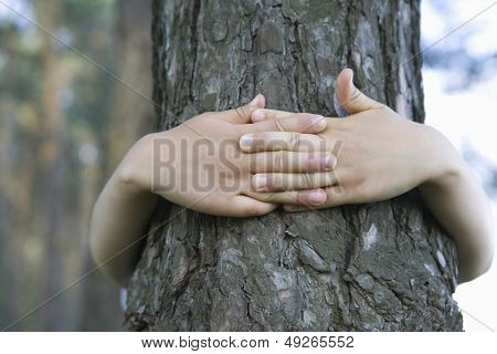 Closeup of hands embracing tree trunk