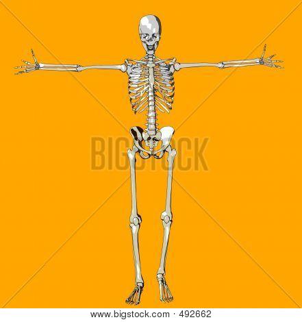 Bone 141