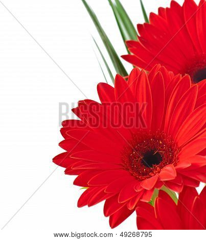Postcard from gerberas