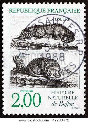 Postage Stamp France 1988 Otters, Buffon's Natural History