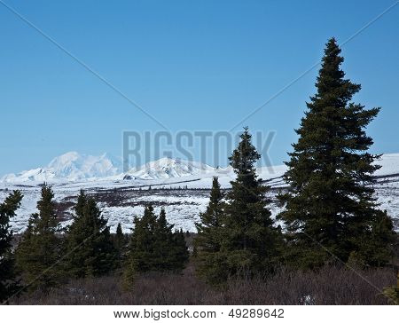 Denali and Forest