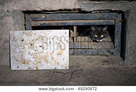 Black Street Cat In The The Basement Window
