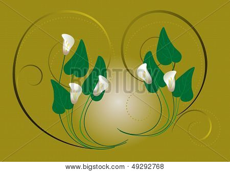 Flowers white Callas on a green background