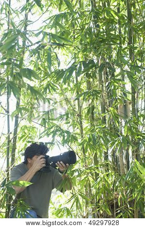 Male photographer adjusting camera lens in bamboo forest