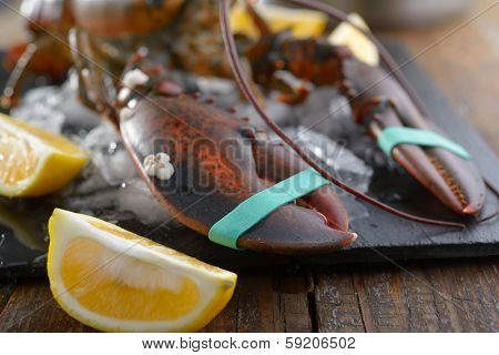 Clawed lobster on a table before cooking. Focus on claws
