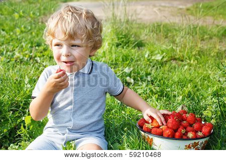 Happy Little Toddler Boy On Pick A Berry Organic Strawberry Farm.