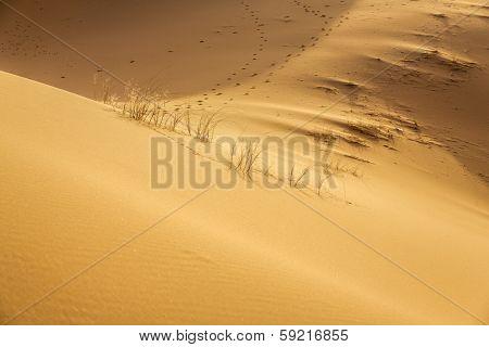 Erg Chebbi desert, Morocco, North Africa