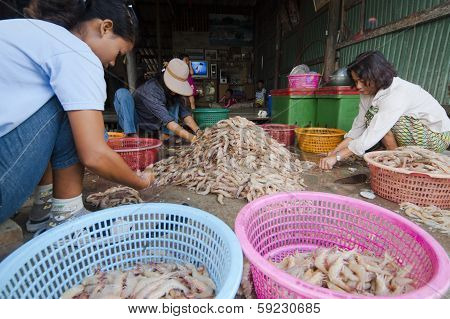 Grading The Shrimps