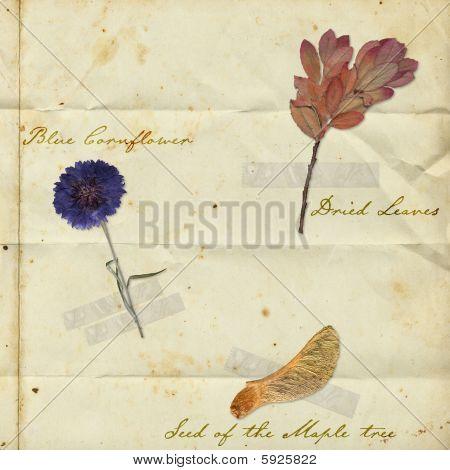 vintage ephemera background