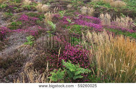 Vegetation Detail Around Perros-guirec