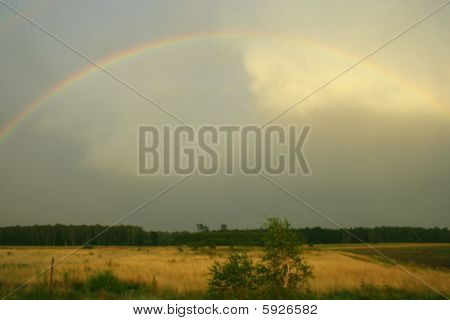 Rainbow above the meadow and field