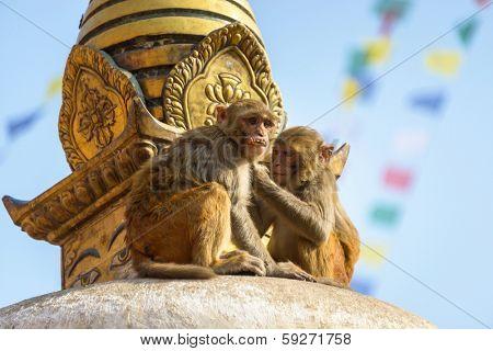 Two macaques on top of chorten in Swayambhunath, Kathmandu, Nepal