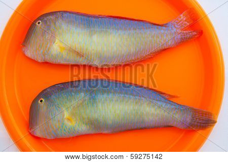 Fish Xyrichthys novacula also called Raor pearly razorfish or cleaver wrasse