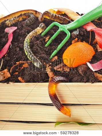 kitchen scraps in compost soil pile wooden crate box close up isolated on white background
