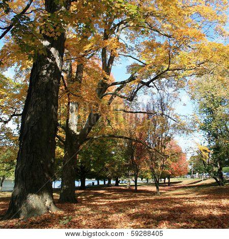 Brookline Autumn Foliage