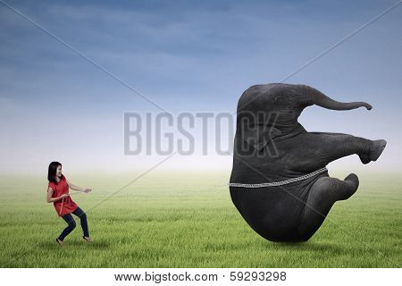 Casual Student Is Pulling Big Elephant