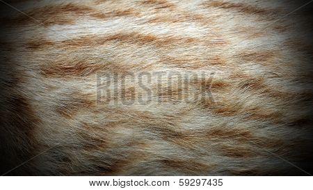 Ocelot Fur
