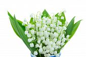 stock photo of lillies  - lilly of the valley blooming posy   isolated on white background - JPG