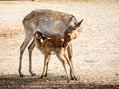 stock photo of deer family  - the deer family living in the zoo - JPG