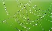 stock photo of spiderwebs  - spiderweb covered with dew on green background - JPG