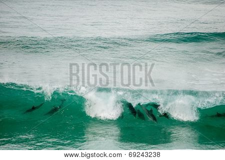 Dolphins riding the waves
