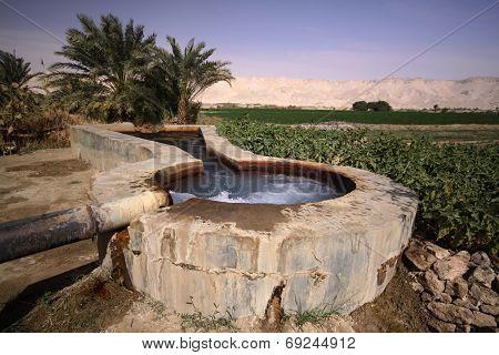 Spring In Kharga Oasis