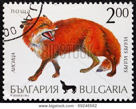 Postage Stamp Bulgaria 1993 Red Fox